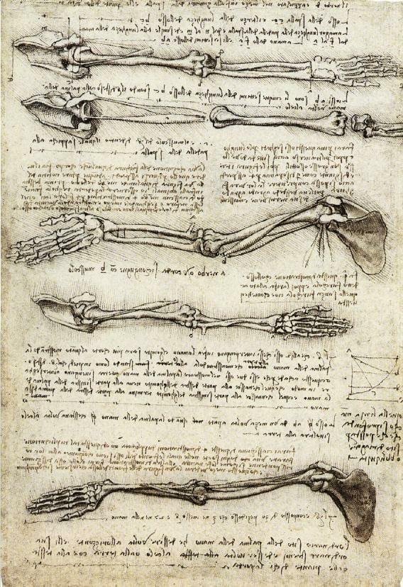 ภาพวาดการศึกษากลไก ข้อต่อ และการทำงานของแขนมนุษย์ ที่มา: wikipedia